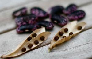 seed-saving